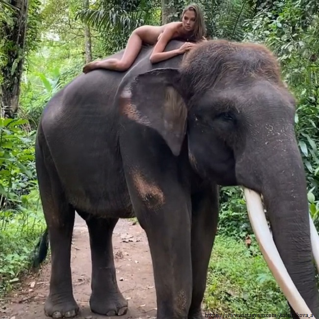 Алеся Кафельникова на слоне