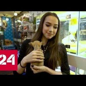 Подробнее: Алина Загитова перед отъездом из Кореи релаксировала в зоомагазине